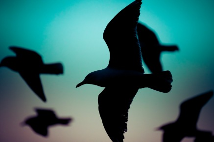 Not a huge fan of bird photos, it's never been a genre that interests me (no offence intended to bird photographers - we all have genre's we like and don't like). This one appealed to me for some odd reason so I decided to include it.